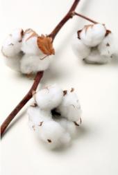 coton-biologique-enfant-bebe