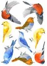 Stickers-pour-decorer-chambre-enfant-oiseau