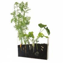 radis-et-capucine-vivarium-racines-et-lombrics
