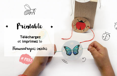 printable-thaumatrope-insecte
