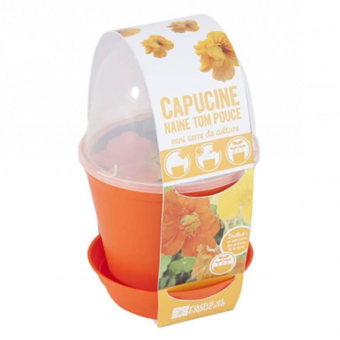 fleurs-capucine-pot-serre-radis-et-capucine