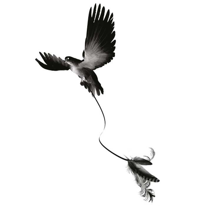 Tatouage-temporaire-oiseau-plume-noir-blanc
